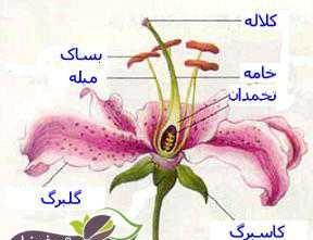 پاورپوینت اندامهای گیاه (شکل، ساختمان، وظایف)